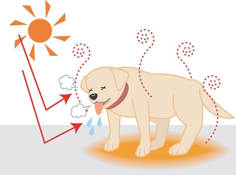 宠物中暑怎么回事